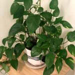 Office plants, why are they so important? – October 2019