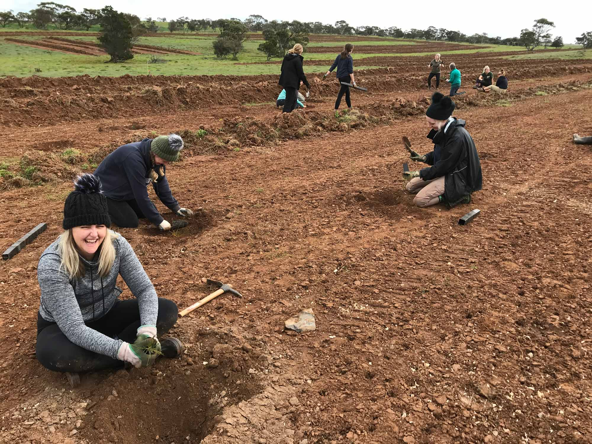 Image of Frahns farm planting day