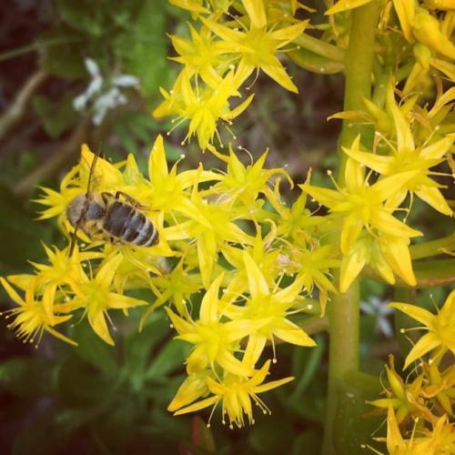Australian Pollinator Week
