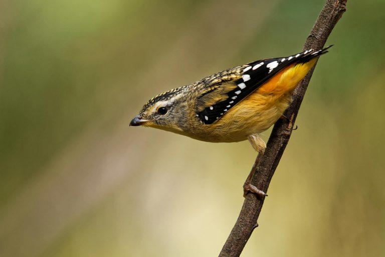 National Bird Week